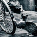 チャリのパンクと自転車屋